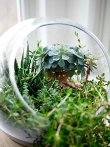 A Globe where I reside